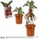 Harry Potter - Peluche interactive Mandrake 40 cm